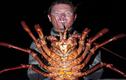 Ngư dân bắt sống tôm hùm khổng lồ nặng 5,4kg