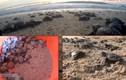 Ra Côn Đảo xem rùa biển đẻ trứng