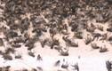 30 hộ dân sống chung với ruồi ở Bình Phước