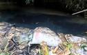 Bắt giữ 2 nghi phạm đổ dầu gây ô nhiễm nước sông Đà