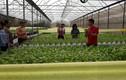 Chàng trai bỏ việc ngân hàng lương cao về trồng rau lãi 100 triệu/tháng