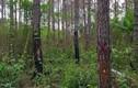 Đi săn trong rừng, bố bắn nhầm con tử vong ở Điện Biên
