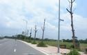 Hà Nội: Dân bức xúc vì hàng cây chết khô trên con đường trăm tỷ