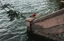 Phát hiện thi thể một cô gái nổi trên hồ Tây
