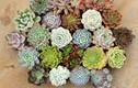 6 loại cây cảnh cả tuần không cần tưới nước, trồng chơi cũng ra hoa