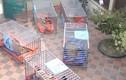 Bắt tạm giam người đàn ông nuôi nhốt 14 con hổ tại nhà tại Nghệ An