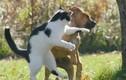 Mục sở thị những trận 'ẩu đả' đậm chất võ thuật đường phố của loài mèo