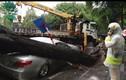 Cây đổ đè bẹp ô tô ở Hà Nội: Bảo hiểm có đền?