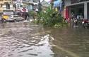 Cảnh tan hoang ở Hải Phòng, Quảng Ninh sau cơn bão số 3