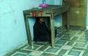 Bé gái nghi bị bạo hành trong chùa: Sư trụ trì có xảo ngôn?