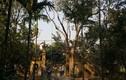 Người bị đánh vỡ đầu vụ cây sưa 200 tuổi ở Bắc Ninh lên tiếng