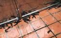 Video: Kỳ thú hàng trăm con cá rô xuất hiện trong sân nhà ở Hải Phòng
