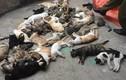 Nam Định: Hoang mang trước việc hàng loạt mèo chết bất thường