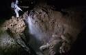 Dịch tả lợn xuất hiện tại Hải Dương: Khẩn trương tiêu hủy 169 con lợn