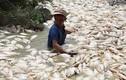 Cá chết hàng loạt sông La Ngà: Xử lý nghiêm nếu có hành vi vi phạm pháp luật