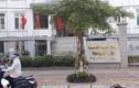 Khởi tố Bí thư đoàn phường ở Thái Bình dâm ô với bé gái 11 tuổi