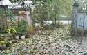 Mưa lớn, mưa đá kèm dông lốc Tết Nguyên đán: Hơn 12000 ngôi nhà hư hại