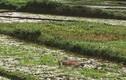 Thảm án 3 người chết tại Điện Biên: Con nợ giết vợ chồng chủ nợ rồi tự sát?