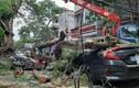 Cơn dông quật cây phượng cổ thụ ở Hải Phòng đổ trúng nhiều xe máy, ô tô