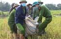 Công an Vĩnh Phúc đội nắng gặt lúa giúp bà con đang cách ly COVID-19