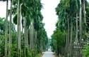 Trồng loại cây vừa làm cảnh vừa bán quả, cả làng thu về 60 tỷ đồng/năm