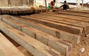 Mộc Châu - Sơn La: Lâm tặc ngang nhiên tàn phá rừng Chiềng Khừa