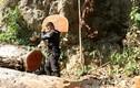 Sơn La: Tận mắt xem lâm tặc phá rừng Chiềng Khừa