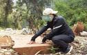 Sơn La: Nhận diện lâm tặc ngang nhiên phá rừng Chiềng Khừa