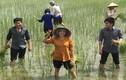 Mặc khen chê, Đan Trường cùng Phương Thanh về quê cấy lúa