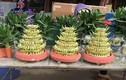 Thị trường hoa, cây cảnh Tết: Tên càng kêu, càng… hút khách