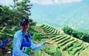 Á hậu Thúy Vân làm gì ngày bạn trai cũ cưới Lan Khuê?