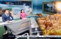 BTV Hữu Bằng đi chân đất khi dẫn chương trình thời sự VTV