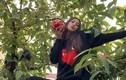 Hoa hậu Tiểu Vy hồn nhiên trèo cây hái quả khiến fan thích thú