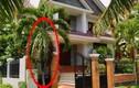 6 loại cây phong thủy hút lộc trồng trước nhà kiểu gì cũng giàu
