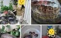 Xôn xao hình ảnh mai rùa phóng sinh khắc tên gia đình Thủy Tiên?