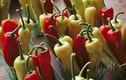 13 thực phẩm đốt cháy mỡ hiệu quả