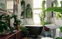Trang trí cây cảnh cho phòng tắm