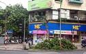 Cây xanh trên phố lớn Hà Nội bị chặt trộm giữa đêm