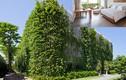 Khách sạn Việt Nam phủ kín cây xanh gây sốt báo Tây