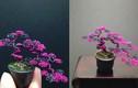 Cây bonsai từ dây kim loại khiến người xem thích mê