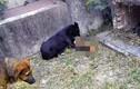 Đến thăm người quá cố phát hiện chó hoang đào mộ ăn hài cốt