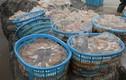 Kinh hoàng phát hiện sứa giả Trung Quốc làm từ chất lạ