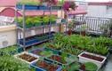 Những vựa rau xanh tốt giữa nhà phố của các ông bố Việt