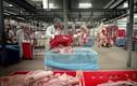 Kinh hoàng cách chế biến gelatin làm kẹo dẻo từ bì lợn