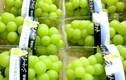 Nho mẫu đơn của Nhật giá hơn triệu đồng/kg vẫn hút khách Việt