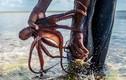 Theo chân những thợ săn bạch tuộc chuyên nghiệp ở Zanzibar
