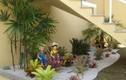 Cách tạo vườn xinh trong nhà phố từ những khoảng đất thừa