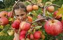 Thực phẩm thải độc cơ thể nên ăn mỗi ngày