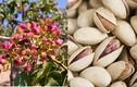 Hình ảnh thú vị của một số loại gia vị quen thuộc trước khi thu hoạch (1)