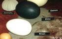 Những sự thật đáng ngạc nhiên về trứng
